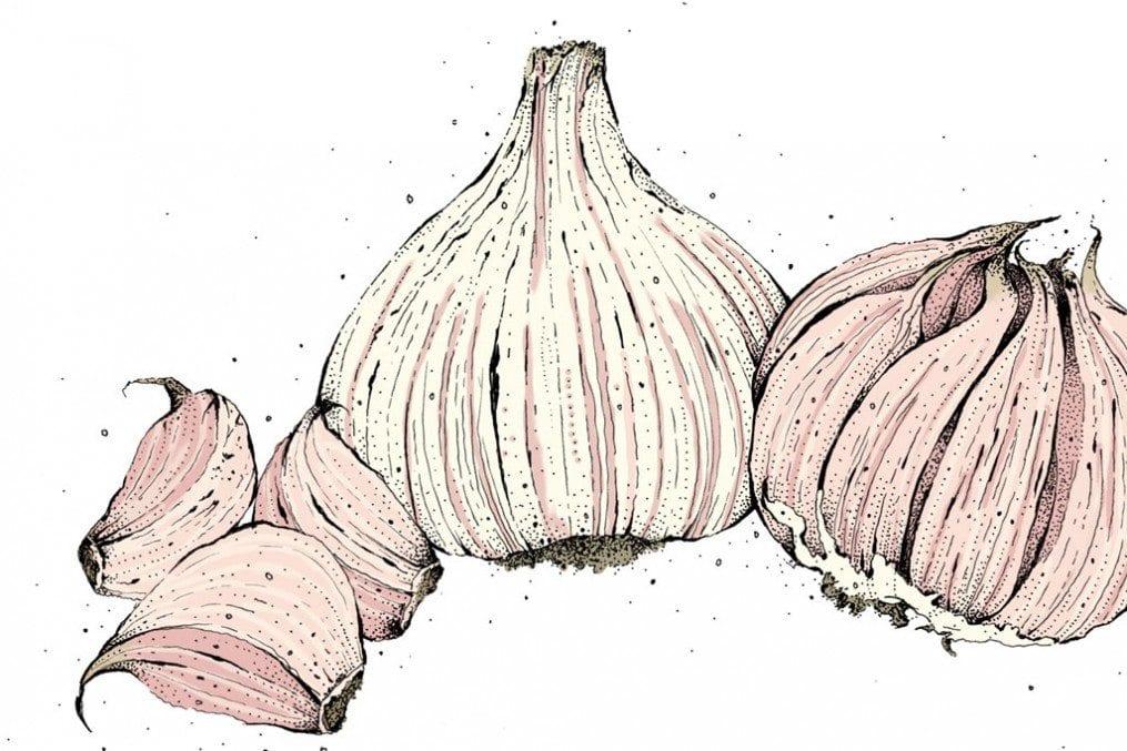 96 Garlic