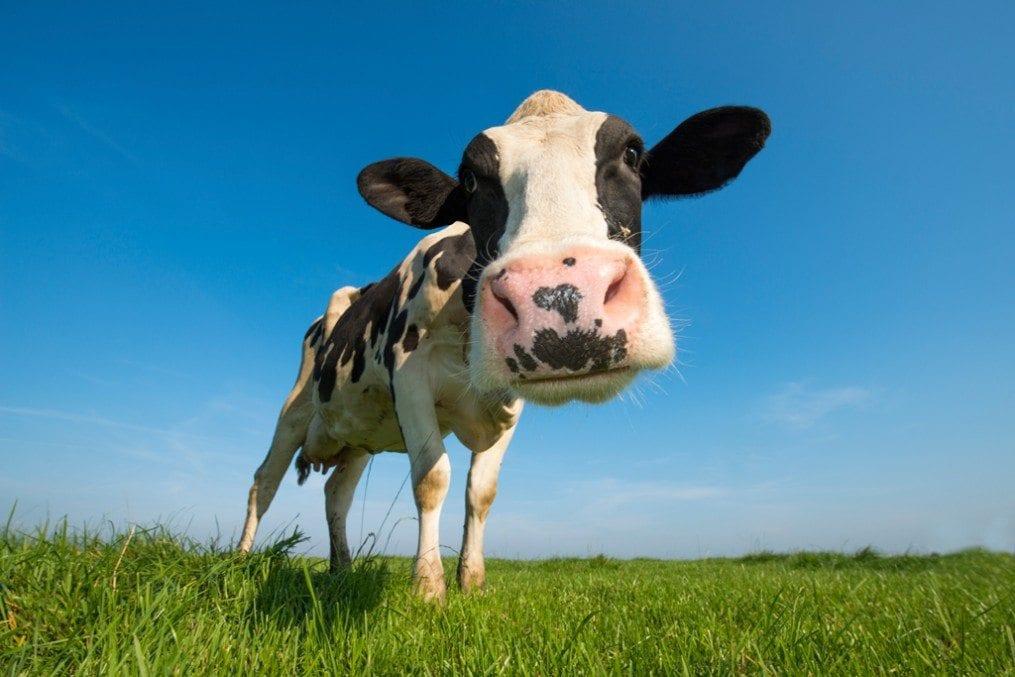 DairyFree_forweb