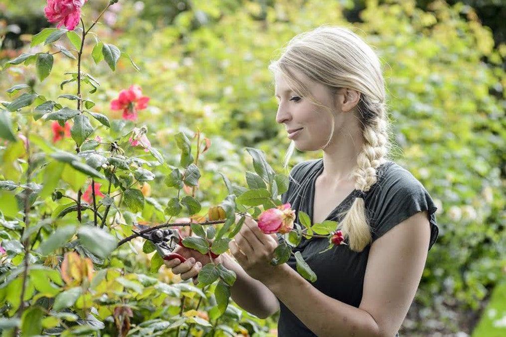 Woman Deadheading Roses