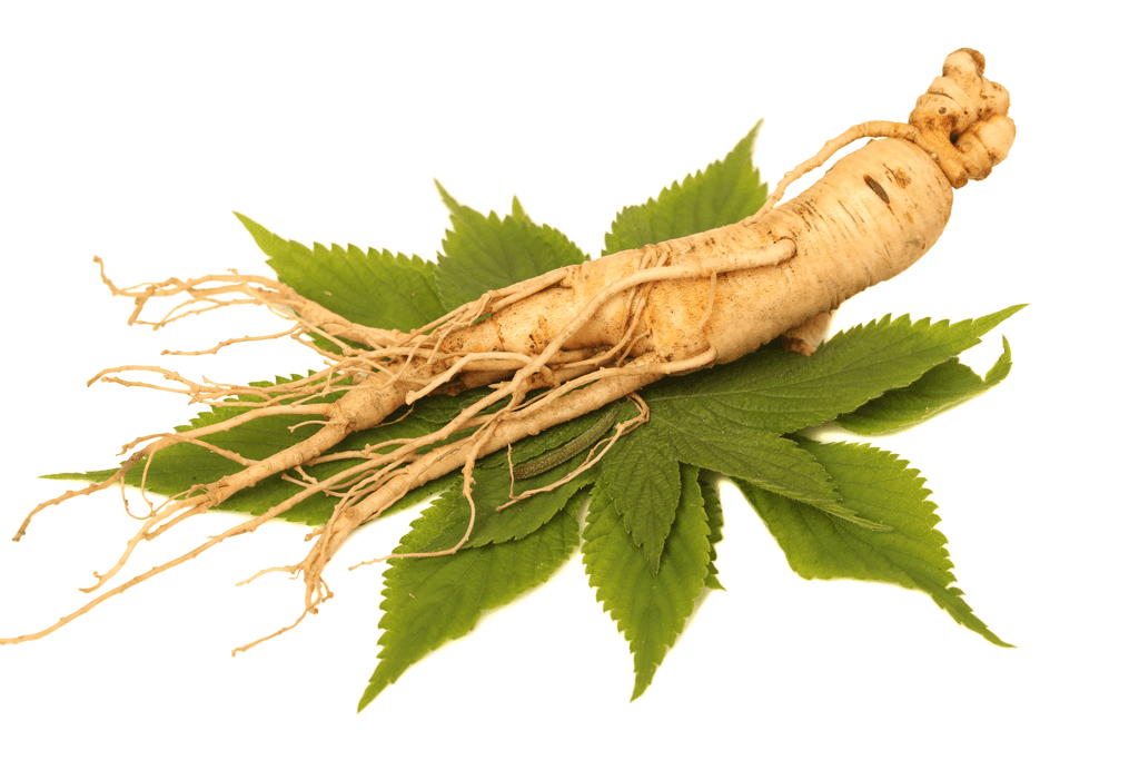 What does ginseng do?